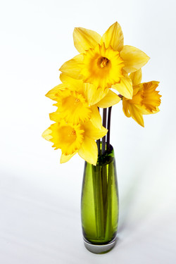 Daffodils in Green Vase