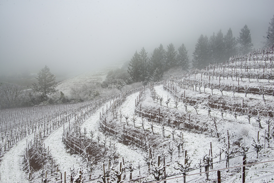 Snow on Tiered Vineyard