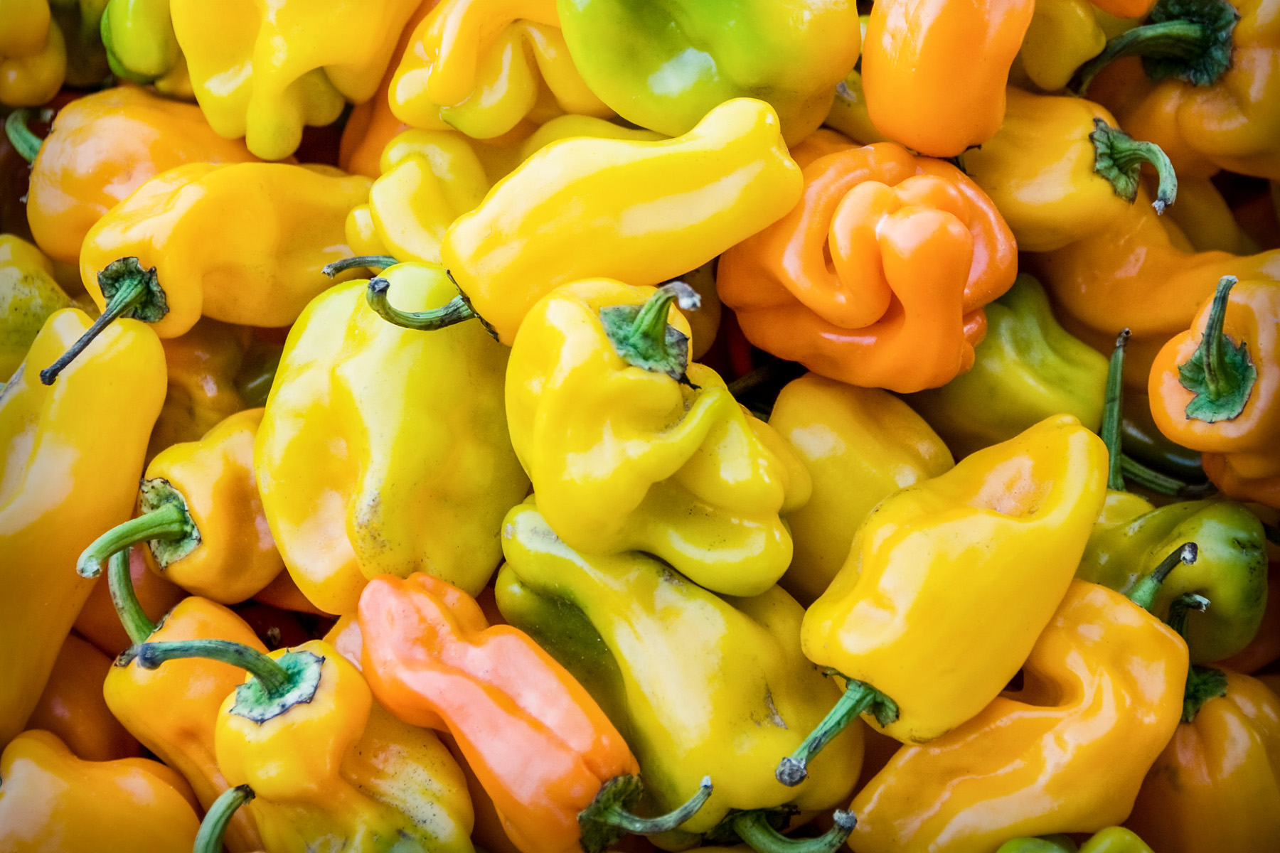 Peppers from Provence