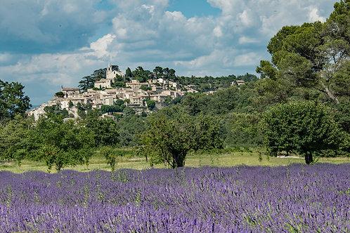 Lavender in Bonnieux
