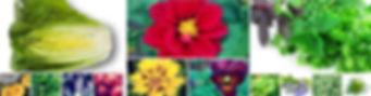 Picture tile of vegetable, herb and flower varieties grown by Rumbalara Nursery