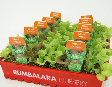 8 Cell Punnets in Nursery Tray