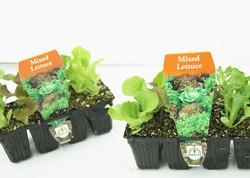 8 Cell Seedling Punnets