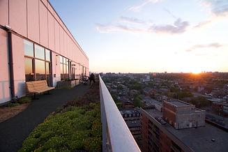 Rooftop garden Toronto sunset