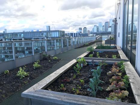 Clock Tower rooftop garden