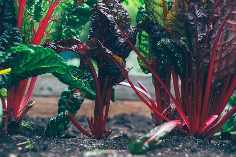 Urban Kale
