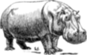 hippo-153037_1280.png