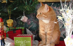 Abigail, Christmas' biggest fan!