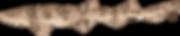 Dark Shyshark / Pretty Happy (Haploblepharus pictus)