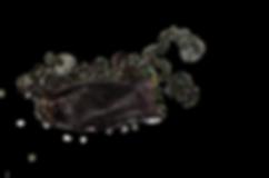 Dark Shyshark (Haploblepharus pictus)eggcase