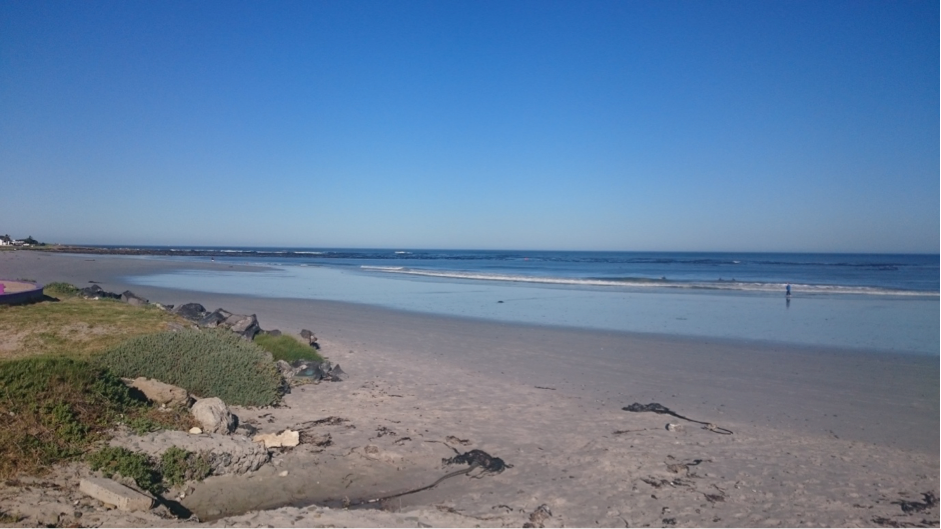 Melkbos beach; the location for our shark and skate eggcase hunt with Edgemead Primary School. Photo by Chantel Elston