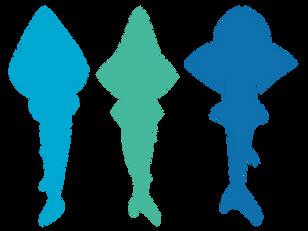 Guitarfishes, Wedgefishes & Sharkrays (Rhinobatiformes)