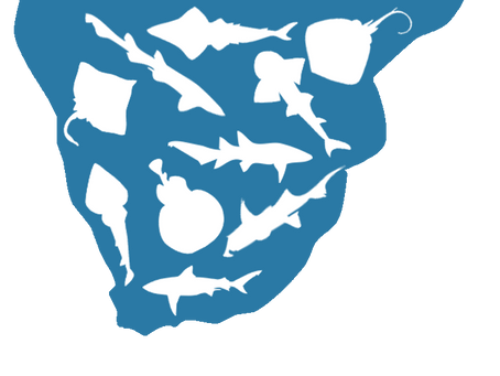 A complete list of Southern African Chondrichthyans