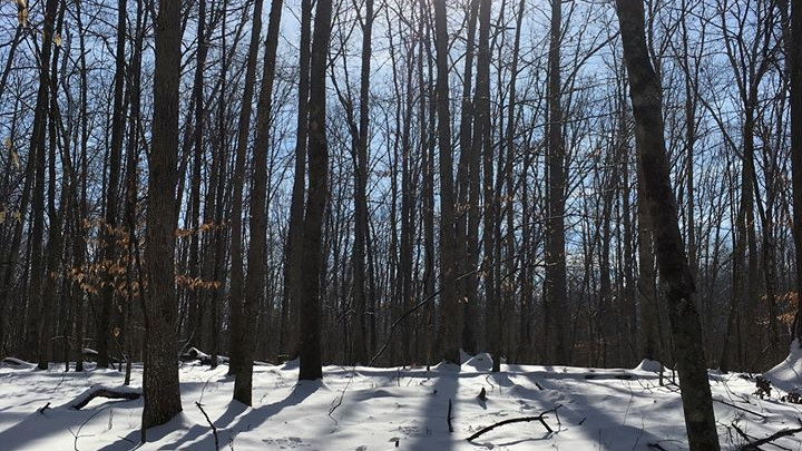 Free Mindful Nature Experience - Reflections of 2019