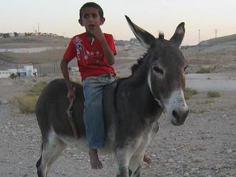 Il entre à Jérusalem sur un âne…