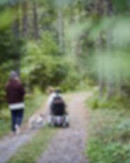 Enjoying the Woods