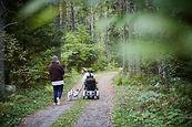 Den Wald genießen