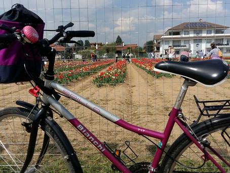 In bici tra i tulipani!