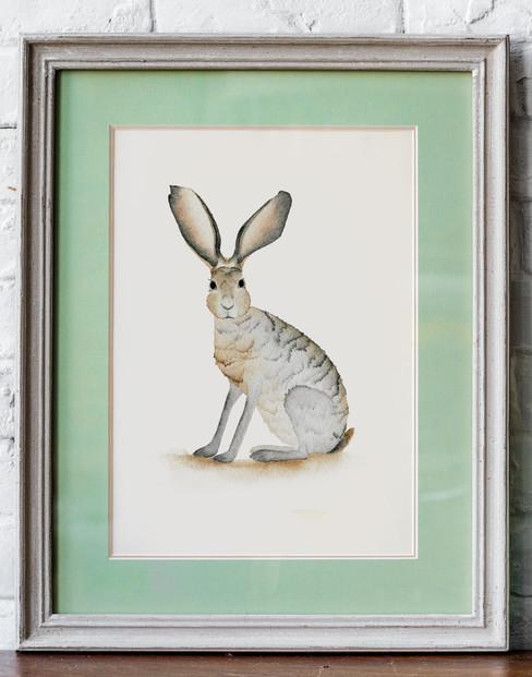 """Jackrabbit - 5x7"""" watercolor on paper"""