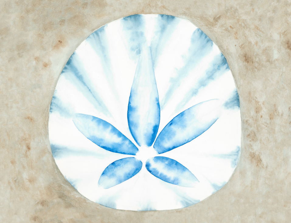 """Sand Dollar - 6x8"""" watercolor on paper"""
