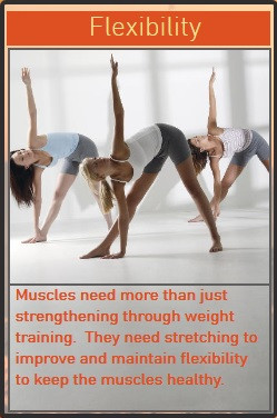 Flexibility is Key to Healthy Muscles