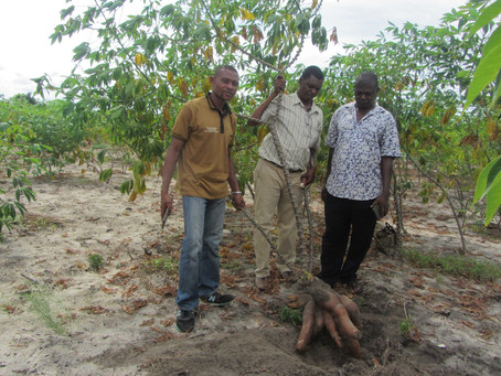 Creating A Cassava Farmer Database in Tanzania for Tailored Advice
