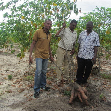 Creating A Cassava Farmer Database in Tanzania for Tailored Advice