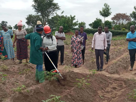 ACAI Trains Farmers and Extension Agents on Cassava Weed Management in Tanzania