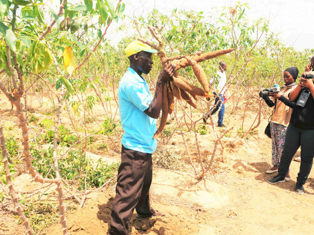 Modern cassava production turning around fortunes of Kisarawe