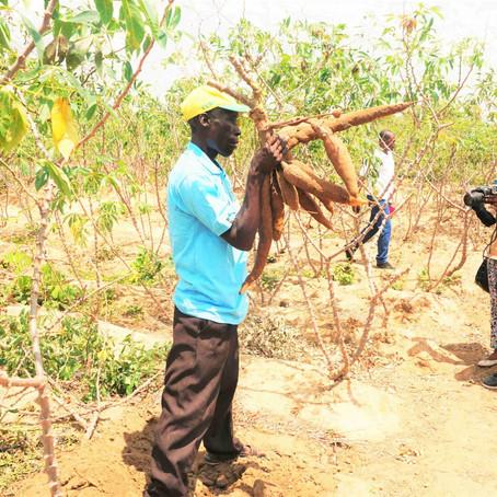 Modern cassava production turning around fortunes of Kisarawe