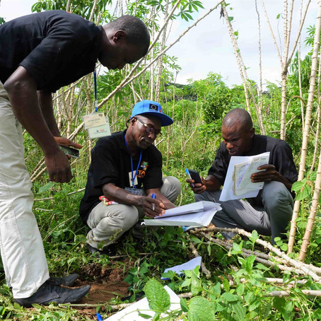 ACAI Develops Akilimo Decision Support System For Cassava Farmers in Nigeria and Tanzania