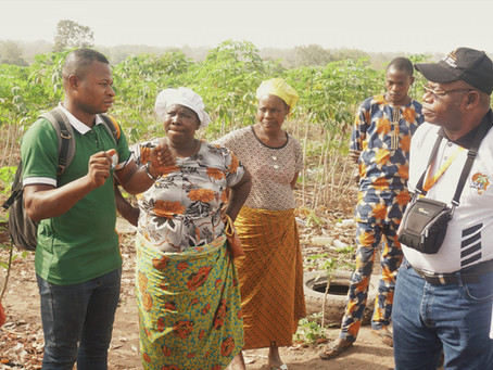 Nigeria's Directorate of Extension Service to Integrate AKILIMO Recommendations for Cassava Farmers
