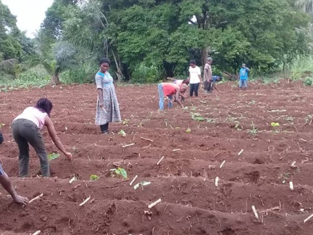 State Governments in Nigeria Offer Land to ACAI for Demonstration and Training