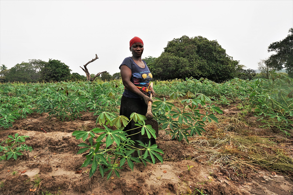 AKILIMO tools provide recommendations that help farmers get  getting the optimum return on investment from their cassava growing activities