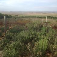 Vierfontein Farm, Napier district