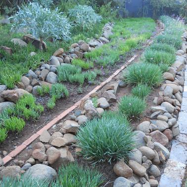 Indigenious garden