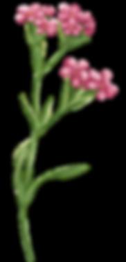 Anda Ansheen, Ansheen, illustator, ilustrator, illustrations, fod illustration, editorial illustration, botanical illustration