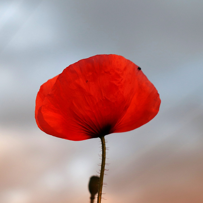 Remembrance Day Newport Pagnell