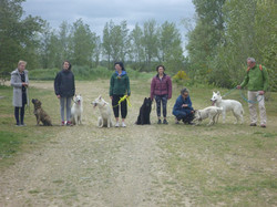cours collectifs chien 31