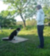 éducateur canin à domicile Toulouse