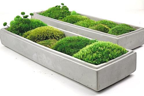 Moss Bowl Planter