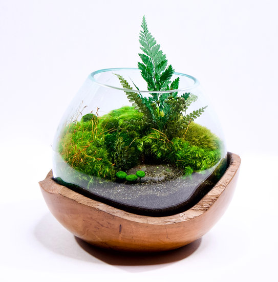 "7"" Terrarium w/ Teak Wood base"