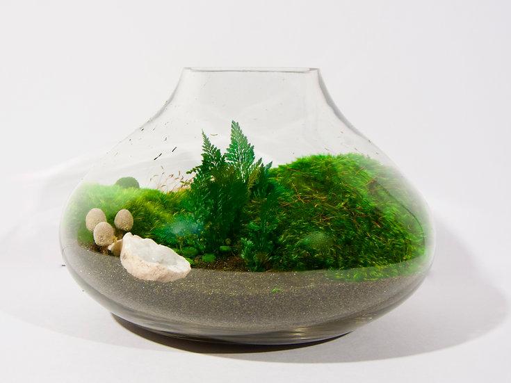 """8"""" Glass Terrarium"""
