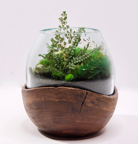 "6"" Terrarium w/ Teak Wood base"