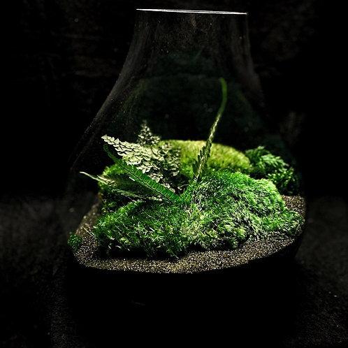 """12"""" Glass Terrarium"""