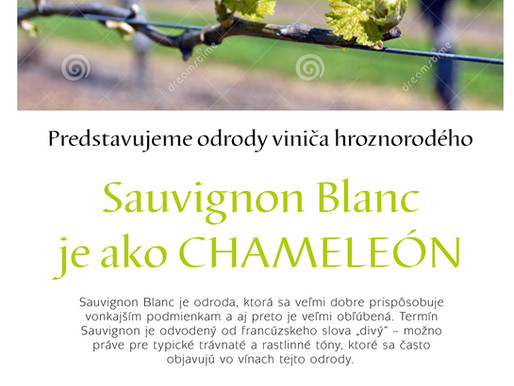 Sauvignon Blanc je ako CHAMELEÓN