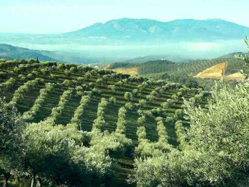 Prečo som si vybrala olivový olej Quinta do Romeu?