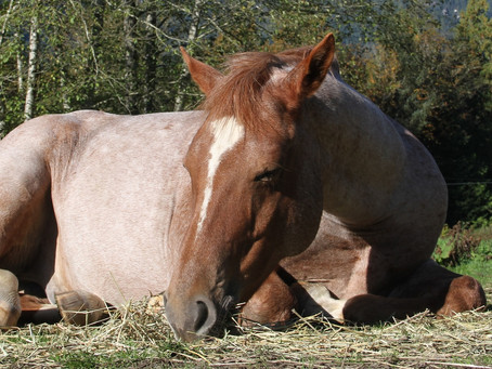 Factors That Affect Sleep Quality in Horses