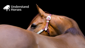 New, Online Equine Education