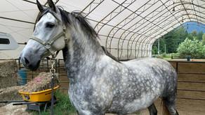 'Scared Horses are Pretty Horses'